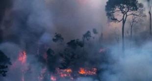 Paru-Paru Dunia, Hutan Amazon sedang terbakar